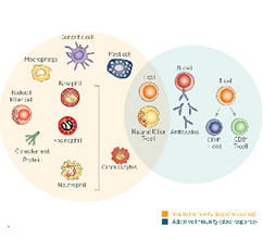 immunotherapy-diagram